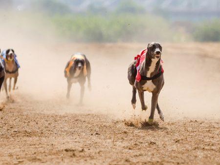 Utrke pasa – Kako dobiti?