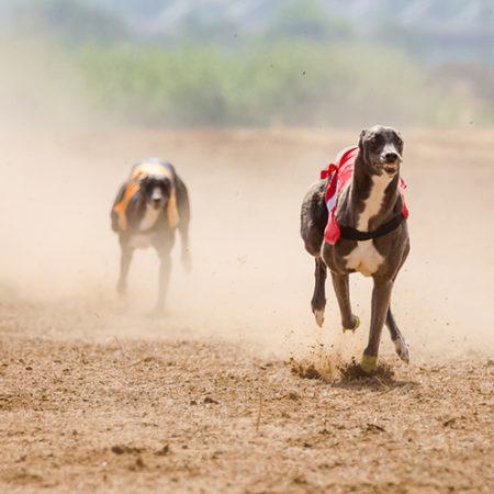 Utrke pasa – kako dobiti i zaraditi novac na utrkama pasa?